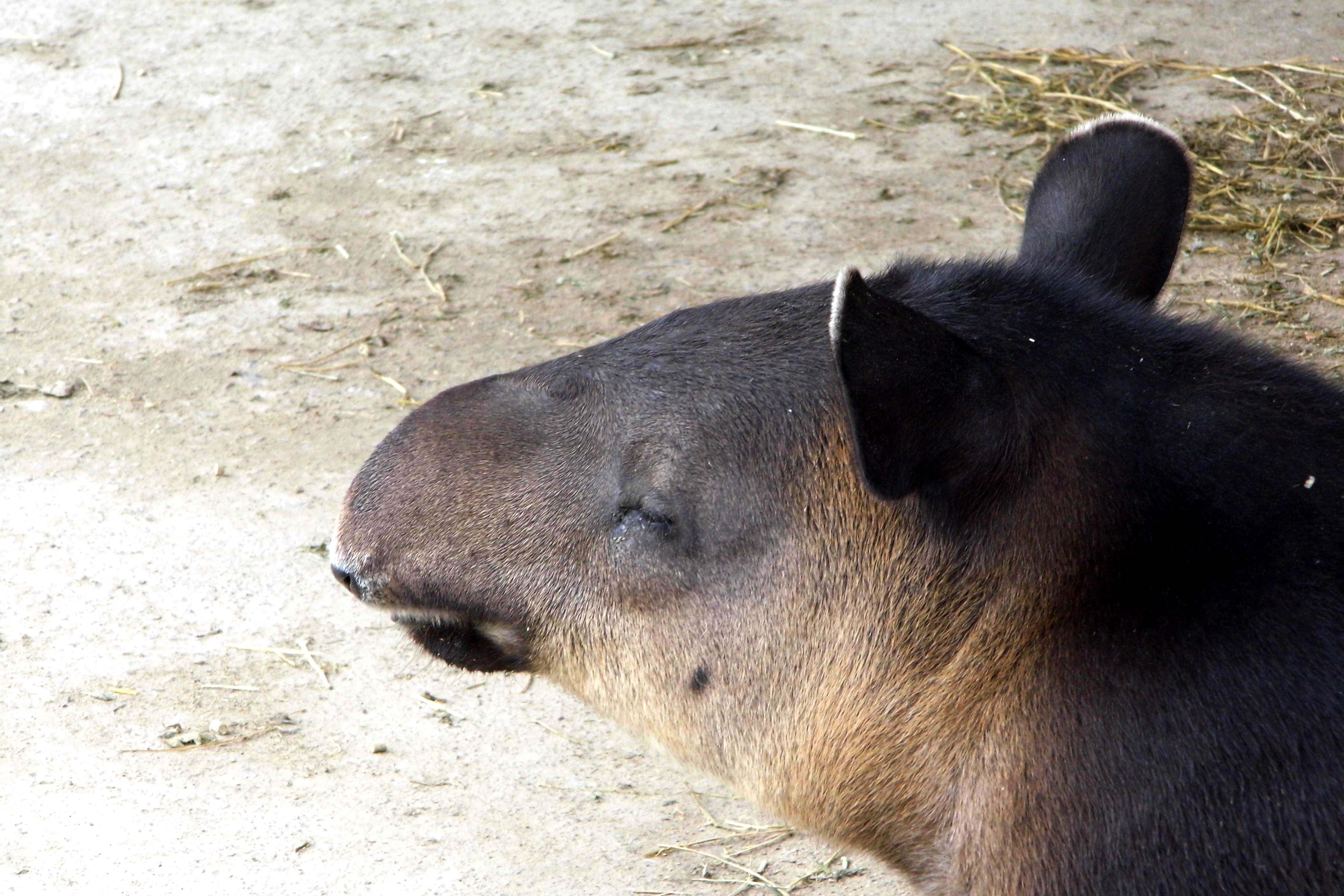 上海野生动物园 - 上海游记攻略【携程攻略】