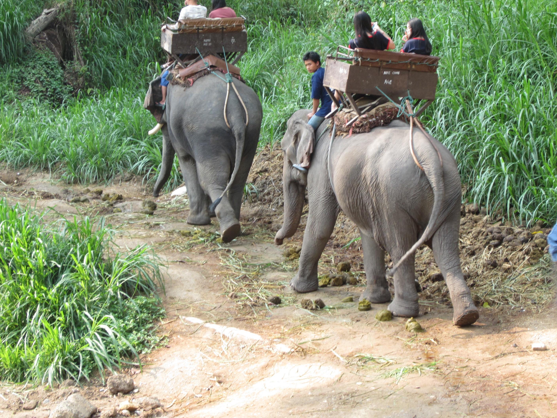 然后可以看会大象洗澡