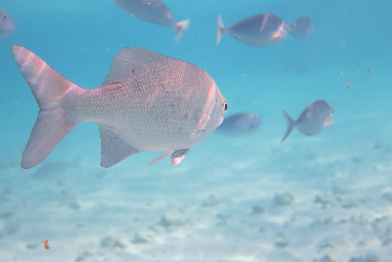 壁纸 动物 海底 海底世界 海洋馆 水族馆 鱼 鱼类 3046_2033