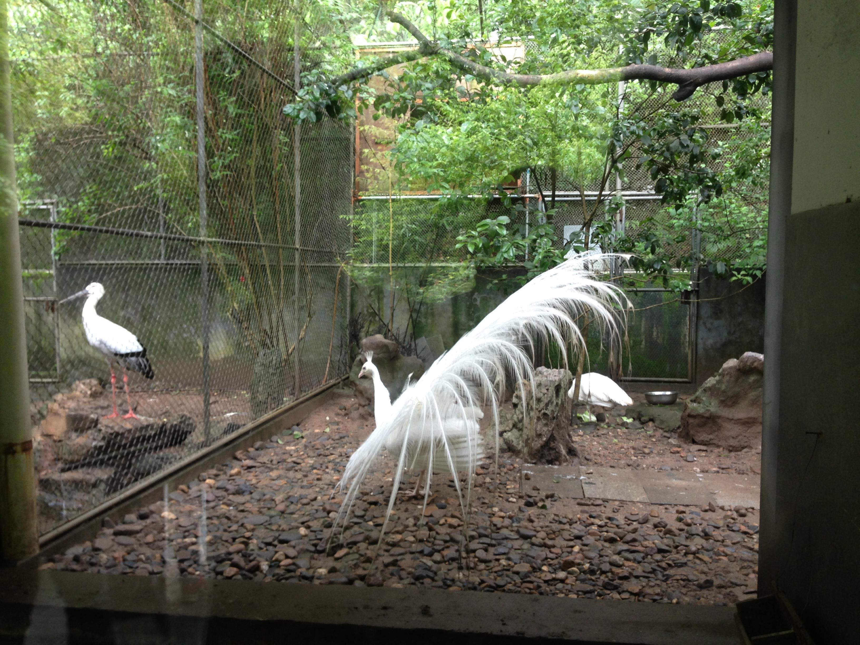 【携程攻略】浙江杭州动物园景点