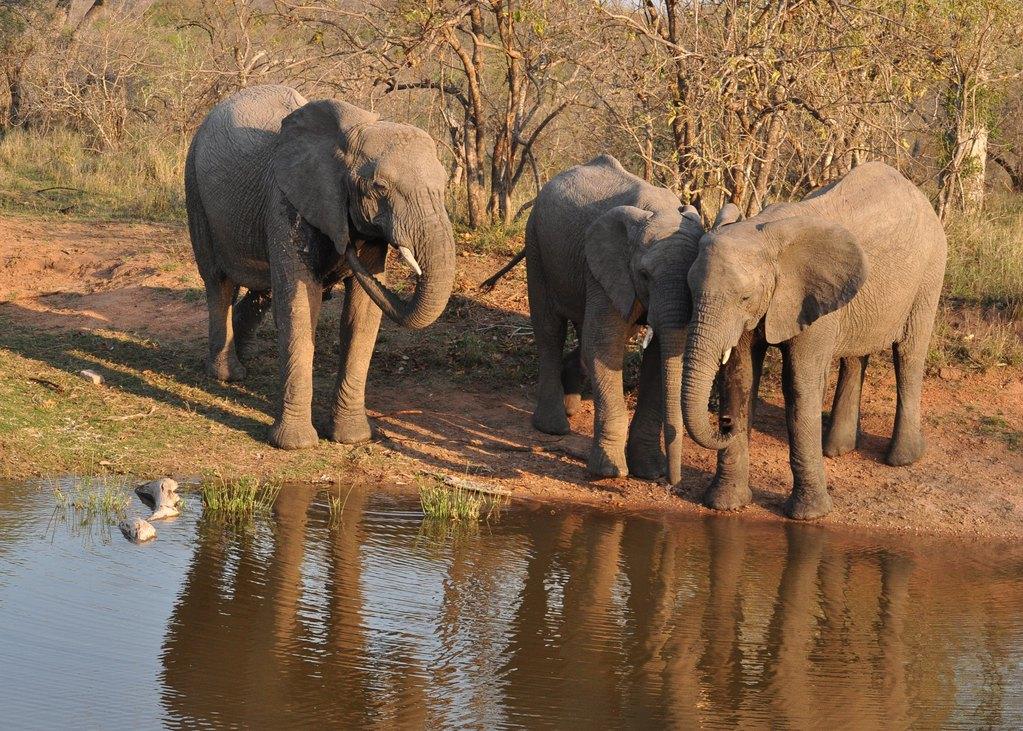 南非动物天堂——探寻克鲁格国家公园