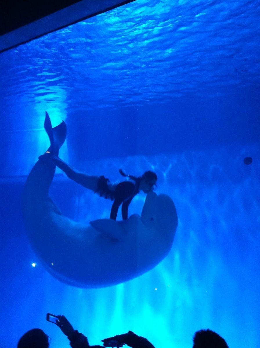 壁纸 海底 海底世界 海洋馆 水族馆 桌面 896_1200 竖版 竖屏 手机