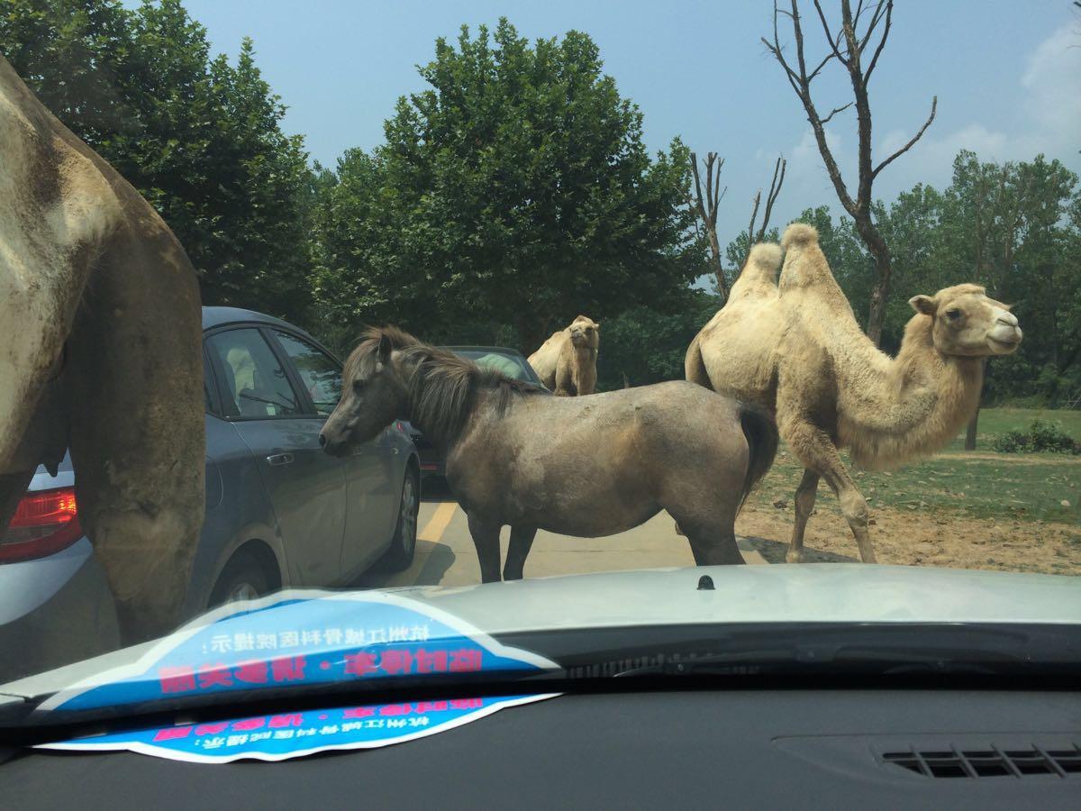 杭州野生动物世界位于杭州近郊,和普通动物园比起来,这里的动物们要自在得多,游人也可以更近距离地观看它们。此外还有不少有趣的免费表演和游乐项目,很适合带小朋友来玩。 景区分为步行区和行车区两部分,可以从正门购票步行入园,也可从右边的自驾游入口付车辆通行费自驾入园(220元/辆)。大部分动物和动物表演都在靠近大门的步行区,但狮子、老虎一类的动物必须去到靠里的行车区才能看到。若是自驾,可先行游览车行区,将车停在景区内的停车场,而后前往步行区继续游玩。 从大门步行入园,首先到达的便是步行区,沿着类似太极图案的环形