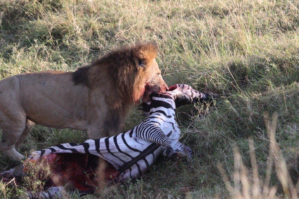 探寻另一个世界--肯尼亚12日动物之旅