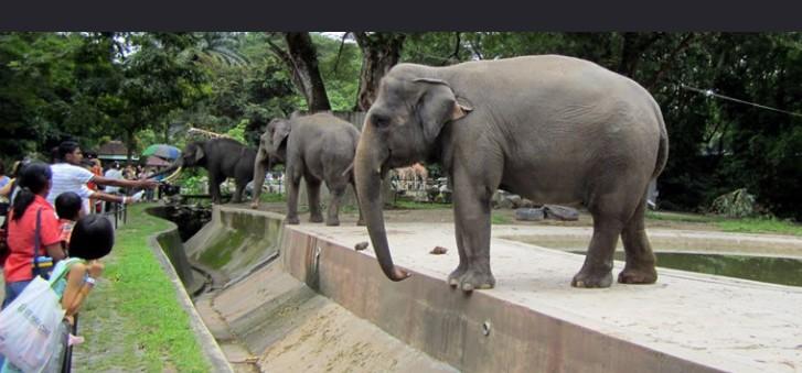 国家动物园 马来西亚国家动物园和水族馆位于马来西亚