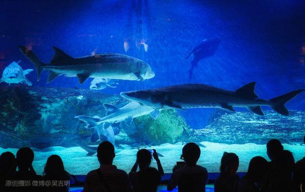 """""""北京海洋馆——位于北京动物园内长河北岸,是目前世界最大的内陆"""
