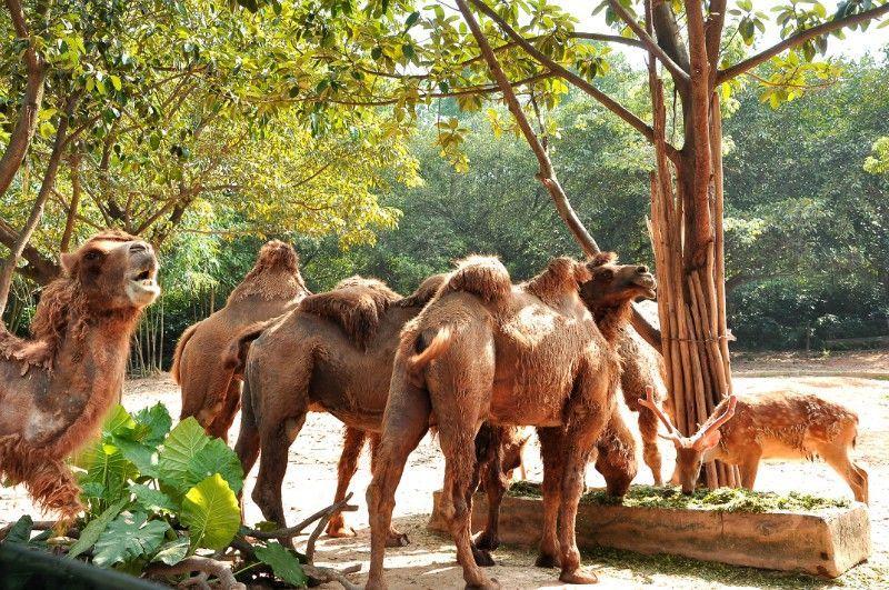 爸爸去哪儿——广州长隆野生动物园