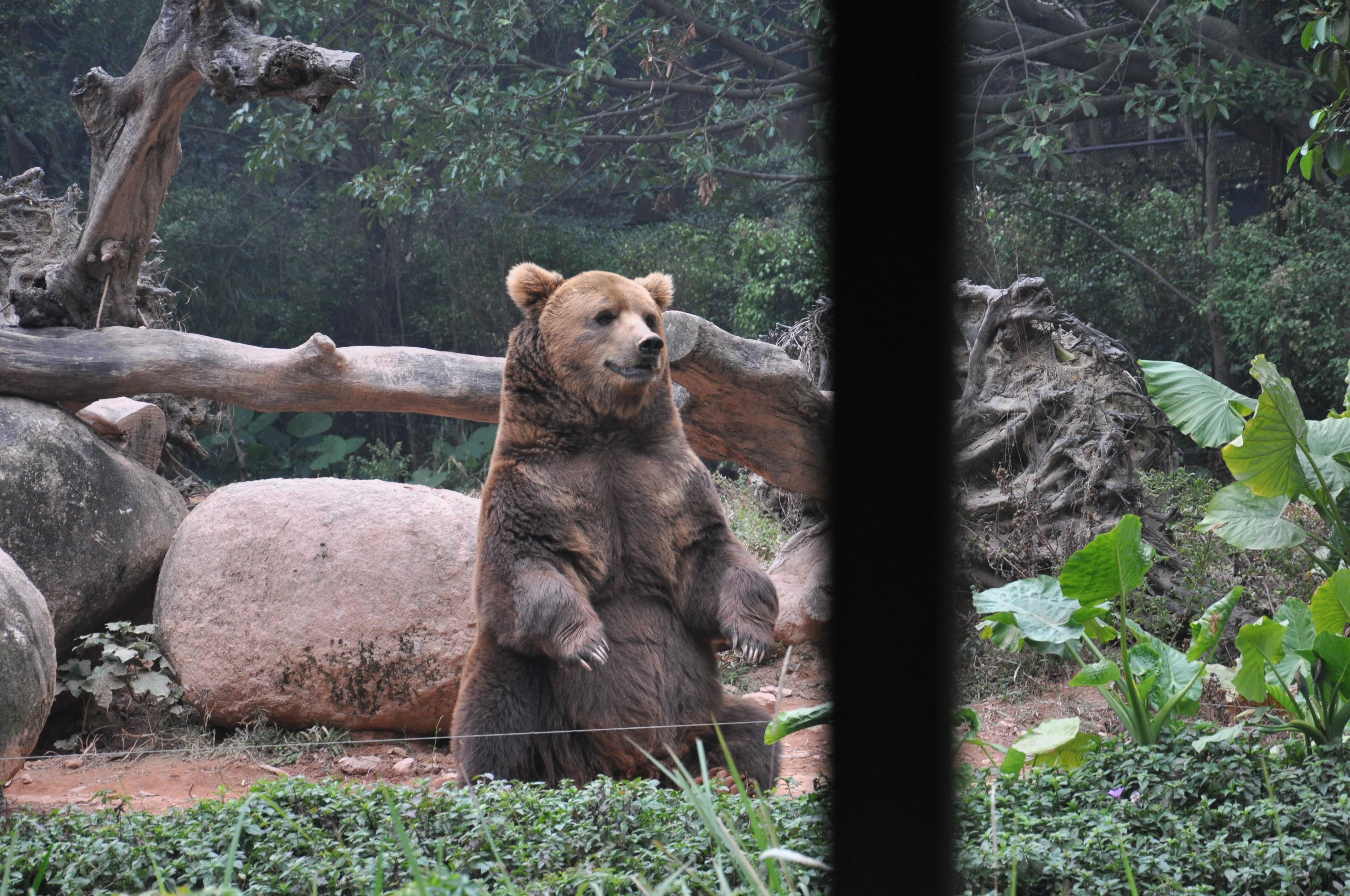 长隆野生动物园