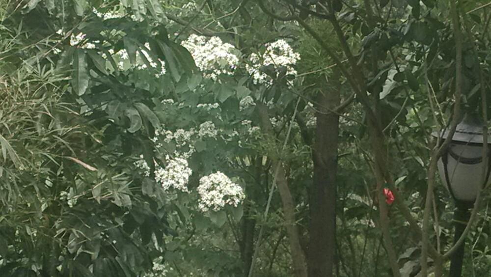 深圳春天的景色