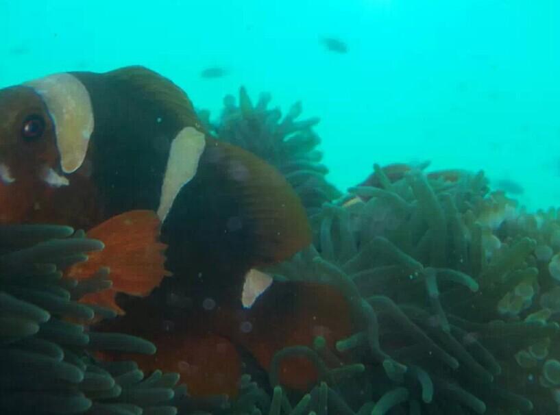 壁纸 动物 海底 海底世界 海洋馆 水族馆 鱼 鱼类 817_606