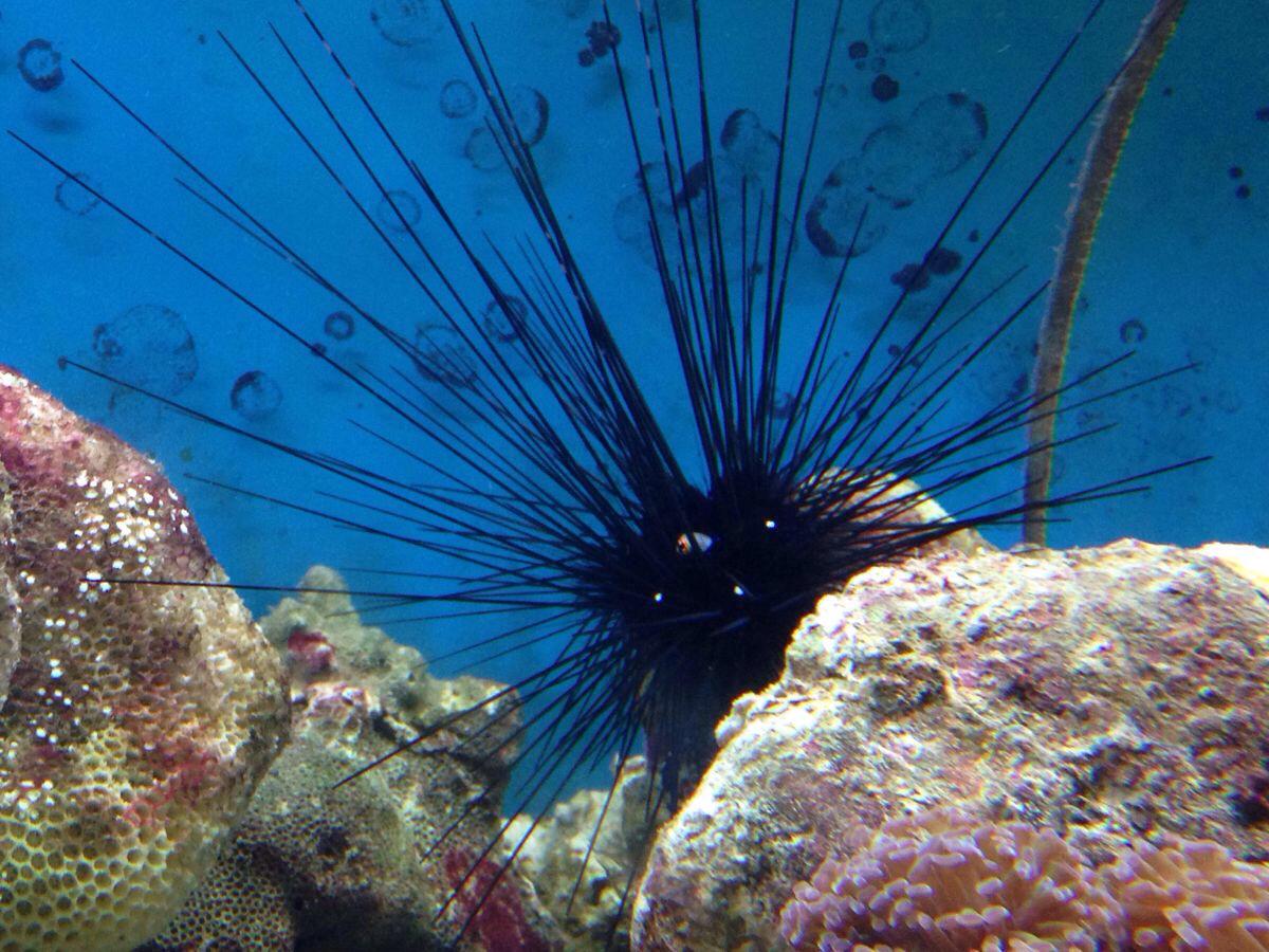 海底 海底世界 海洋馆