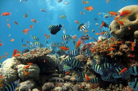 相比上海的海族馆,这里的规模和种类并不算丰富.