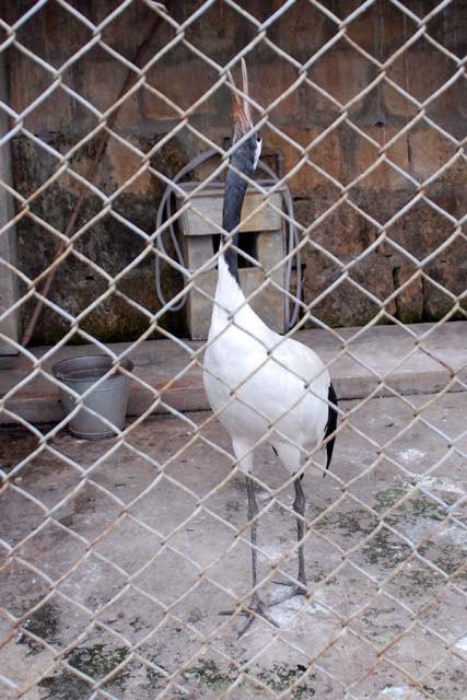 【游记】皖南国家野生动物救护中心(黄山野生动物园)