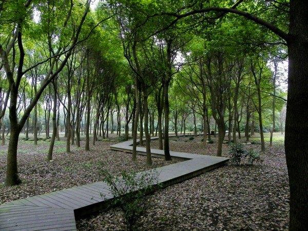 林木葱郁高沙滩