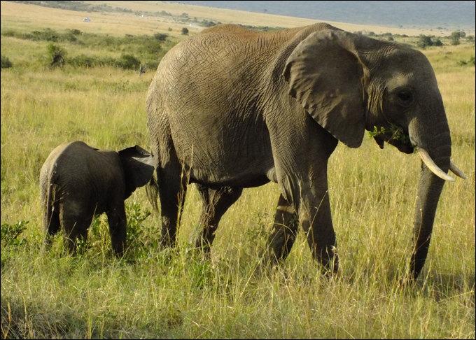 东非动物迁徙季 - 肯尼亚游记攻略【携程攻略】