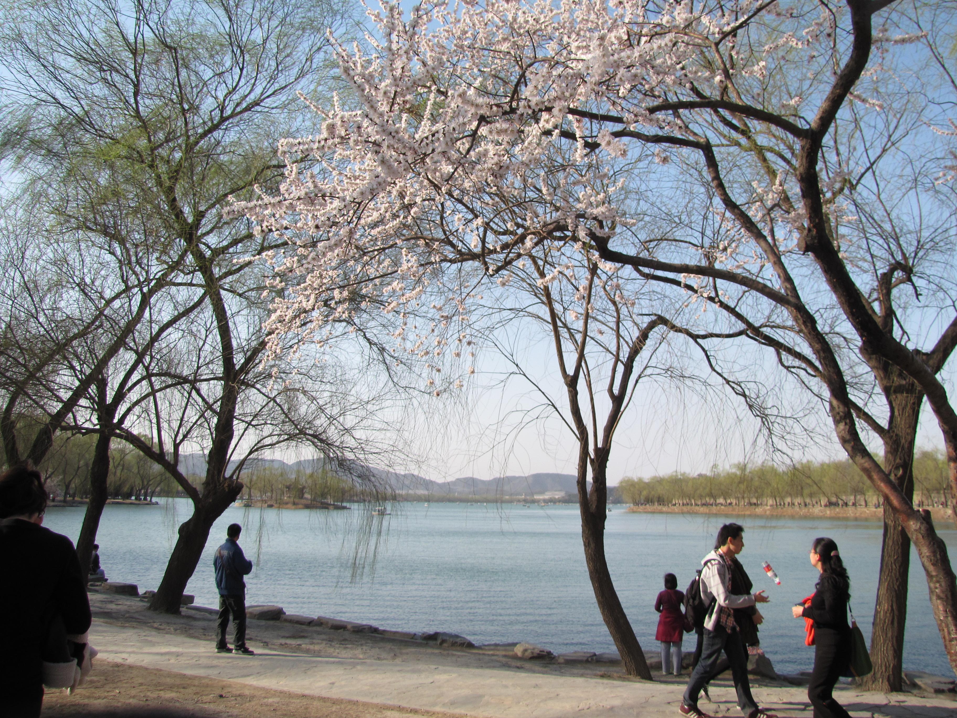 颐和园2014的春天来了