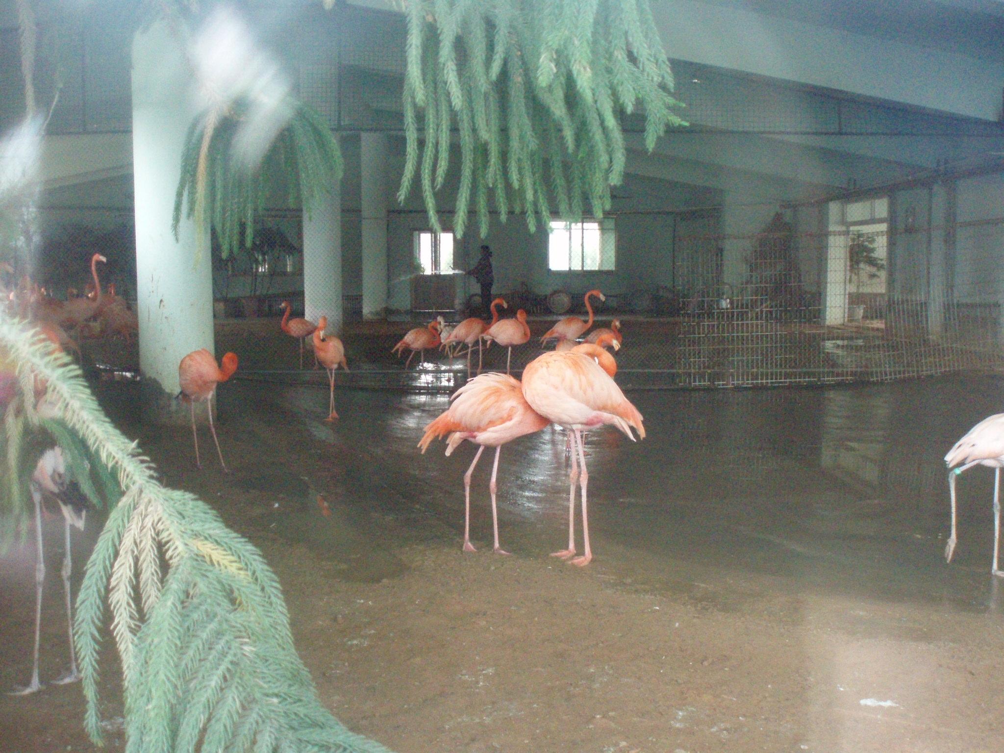 【携程攻略】河北石家庄市动物园景点,就是一般的动物