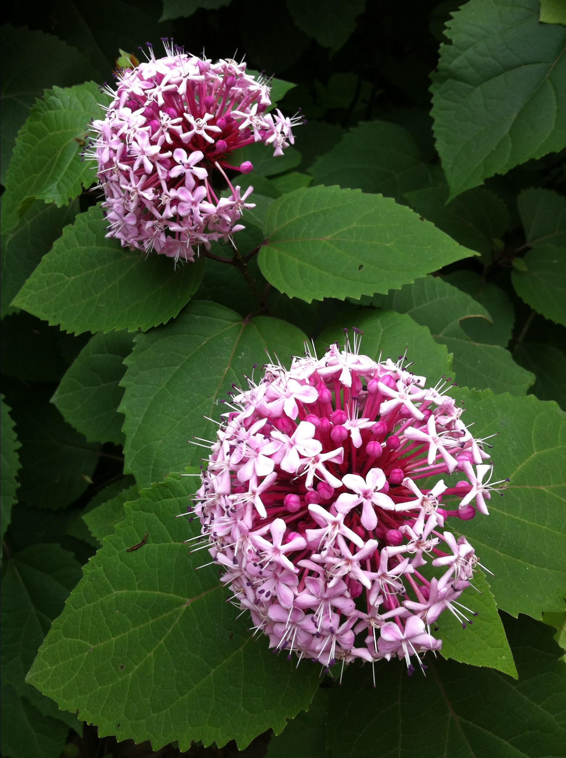 最漂亮花儿的微信头像