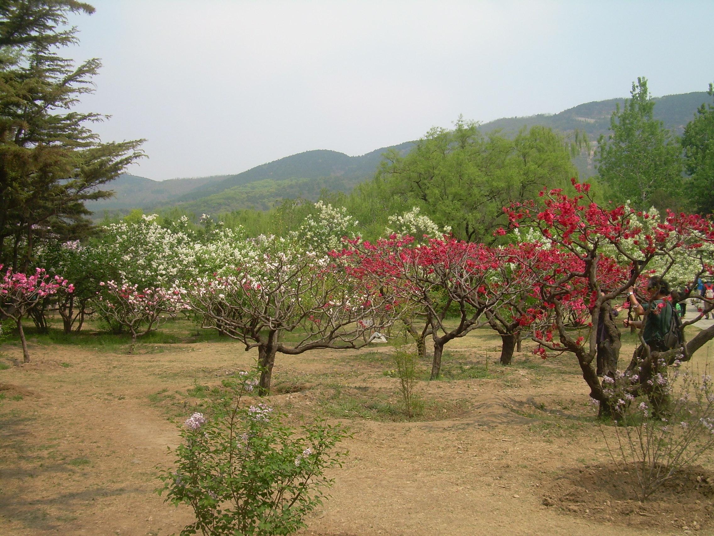 春游北京植物园