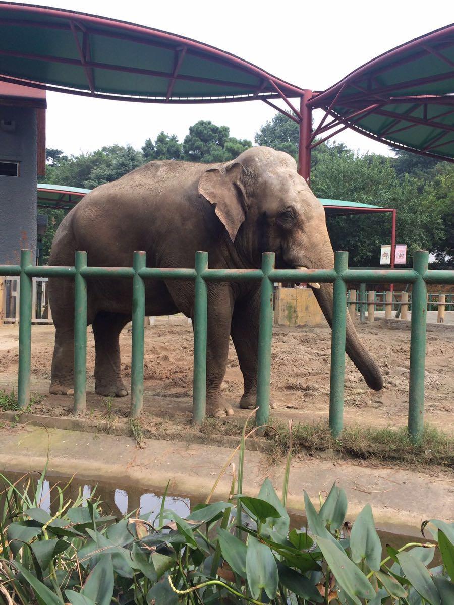 【携程攻略】上海上海野生动物园情侣出游点评