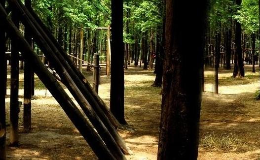 肖甸湖森林公园
