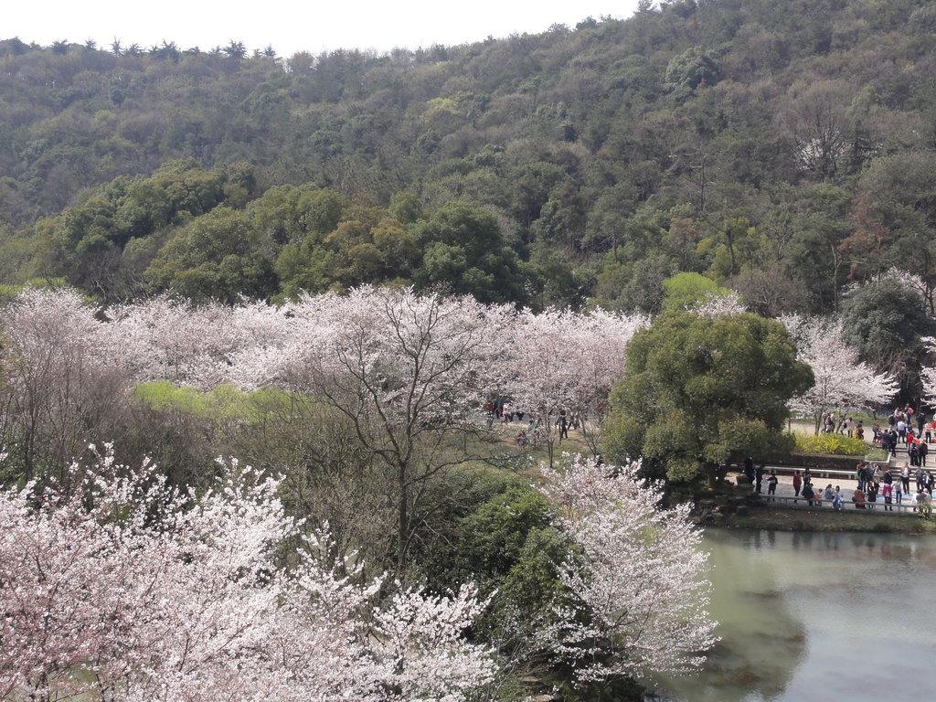清明小长假无锡,乌镇4日摄影自由行,春季游古镇赏风景