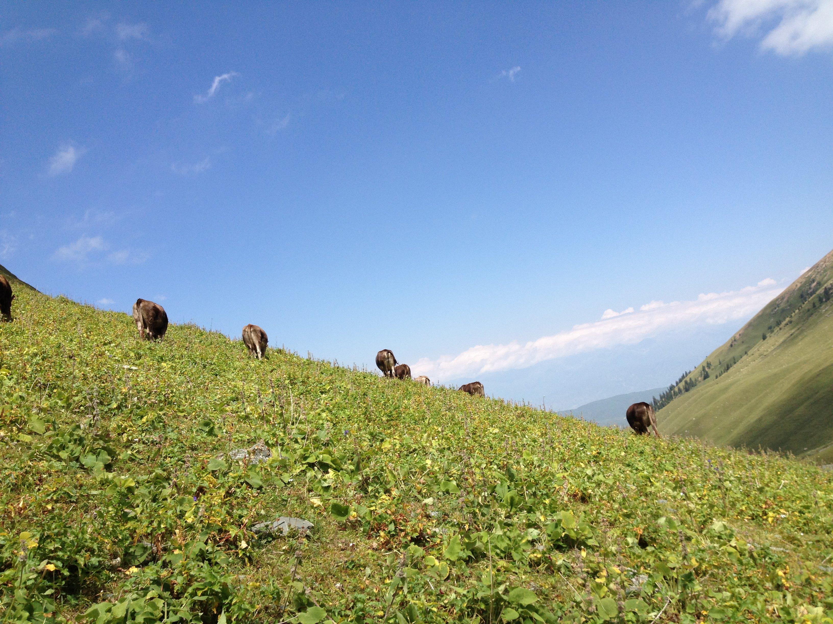 克拉玛依奎屯旅游景点简介,图片,旅游信息推荐-2345