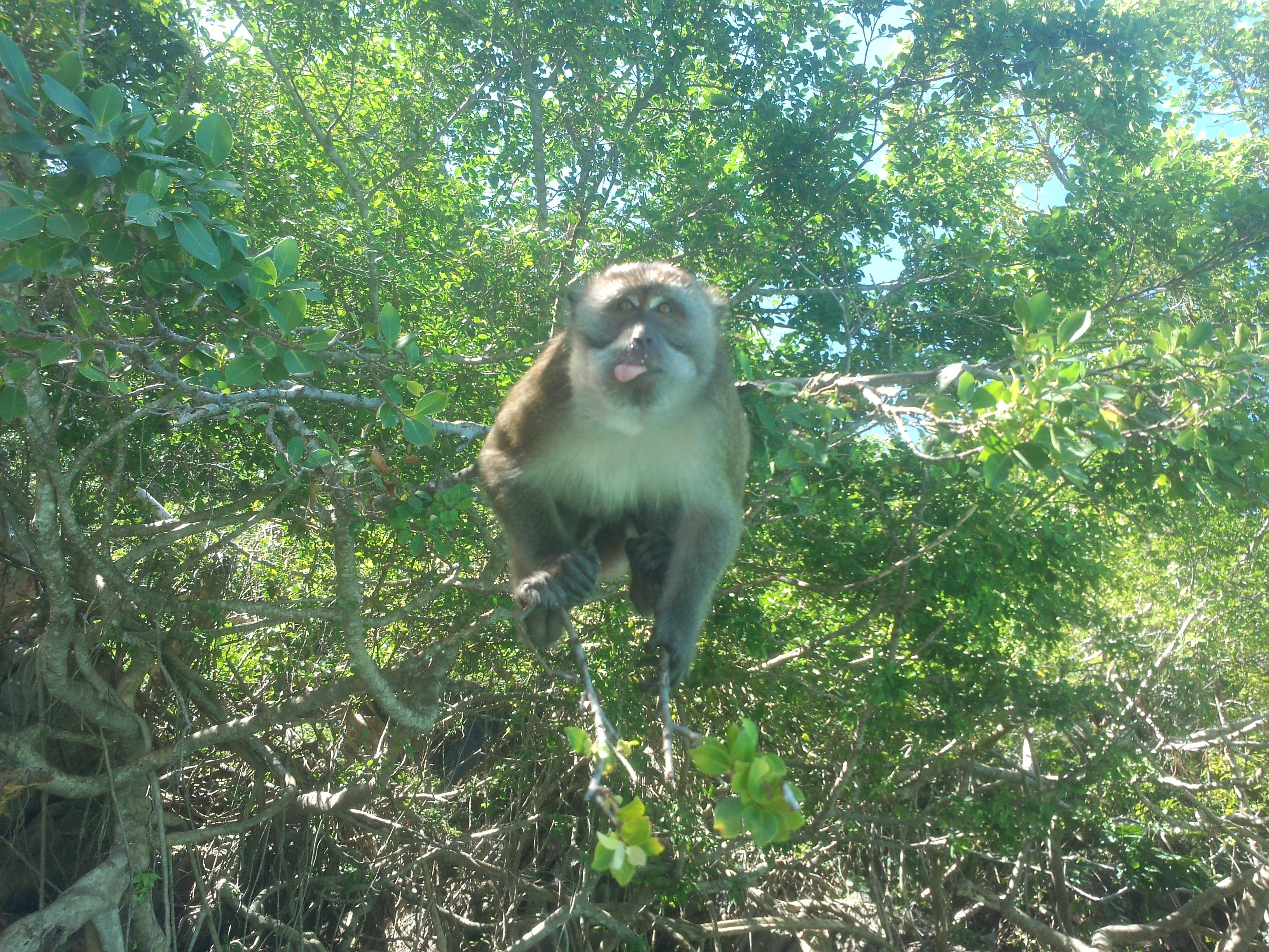 坐着的猴子手绘