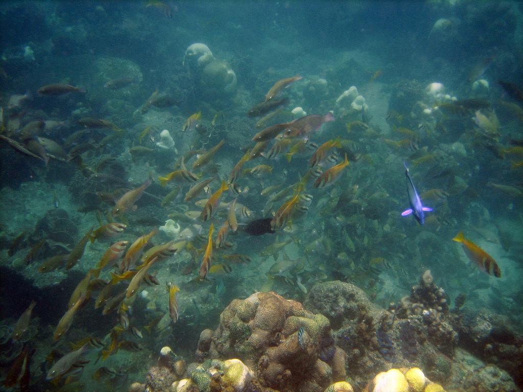 微笑的国度 泰国4 涛岛环岛浮潜游 高清图片