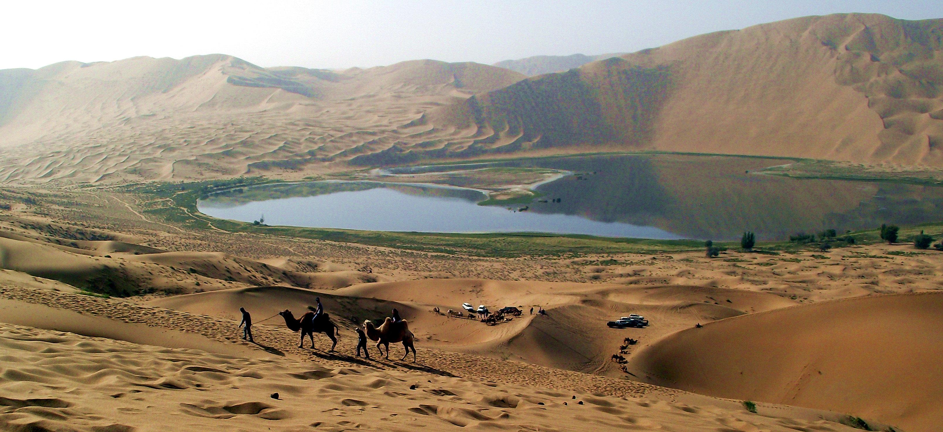 沙漠小动物                             沙漠骆驼