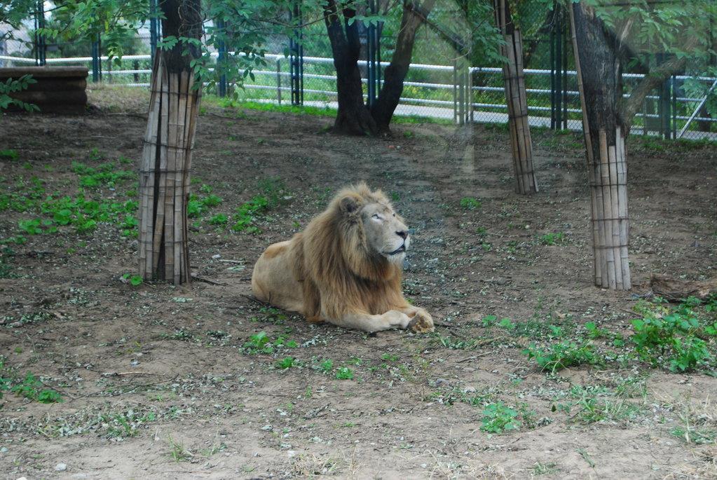 北京野生动物园 - 北京游记攻略【携程攻略】