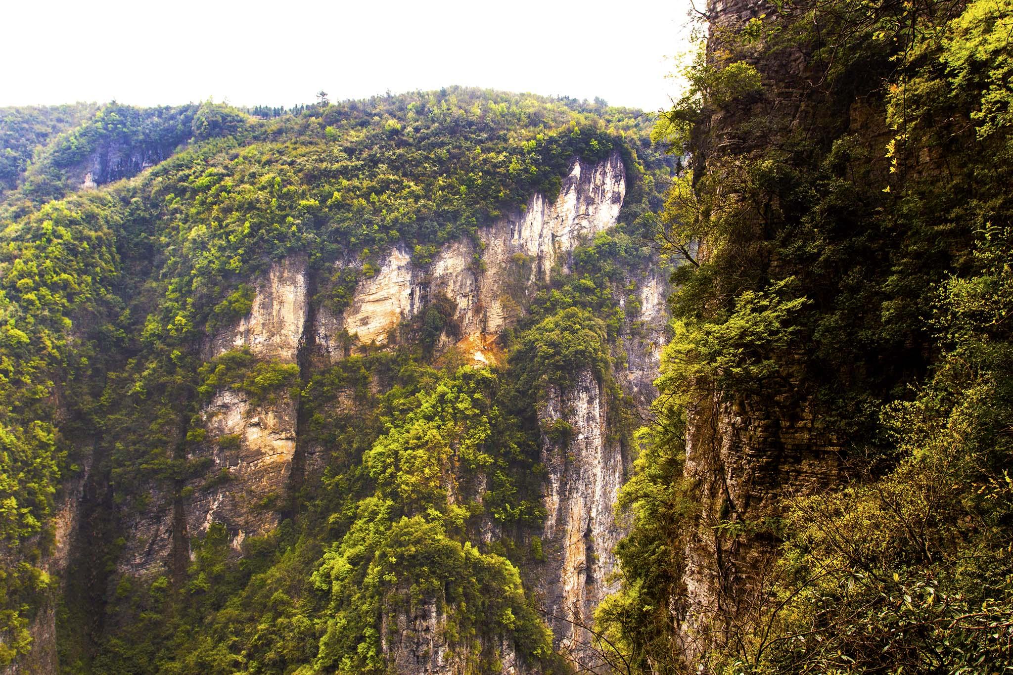 森林山石壁纸手绘