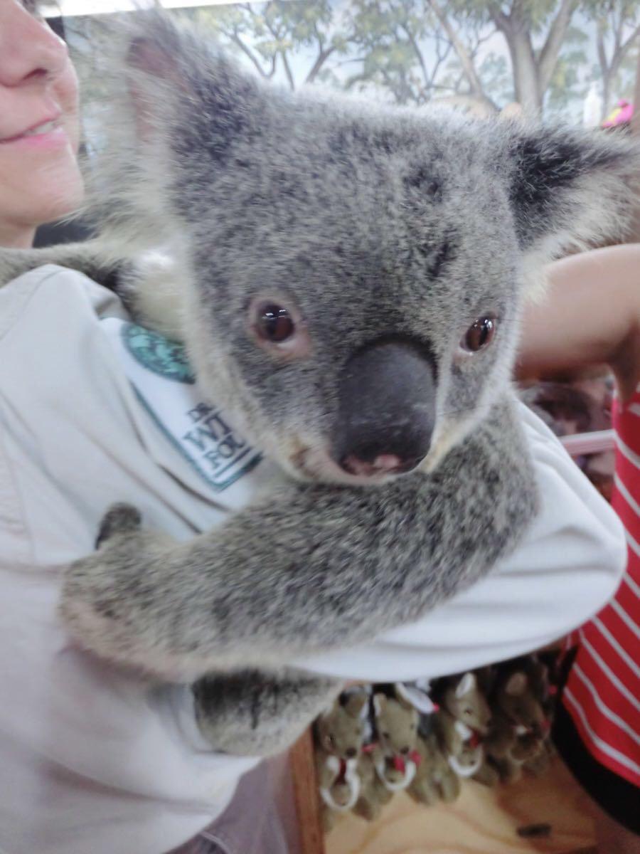 近距离观察它,真心觉得它是世界上最可爱的动物