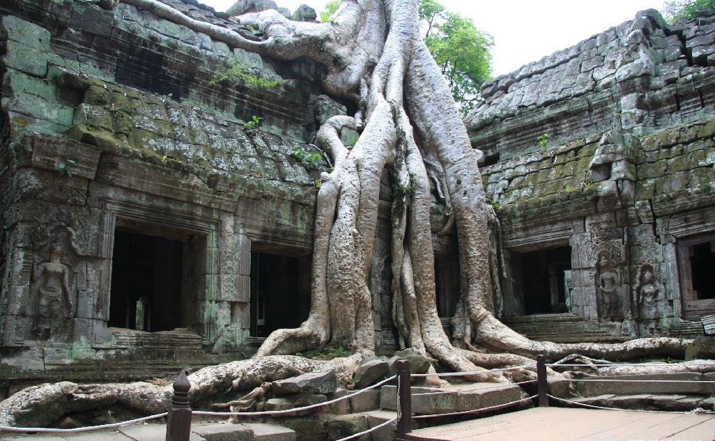 树茎横切结构图