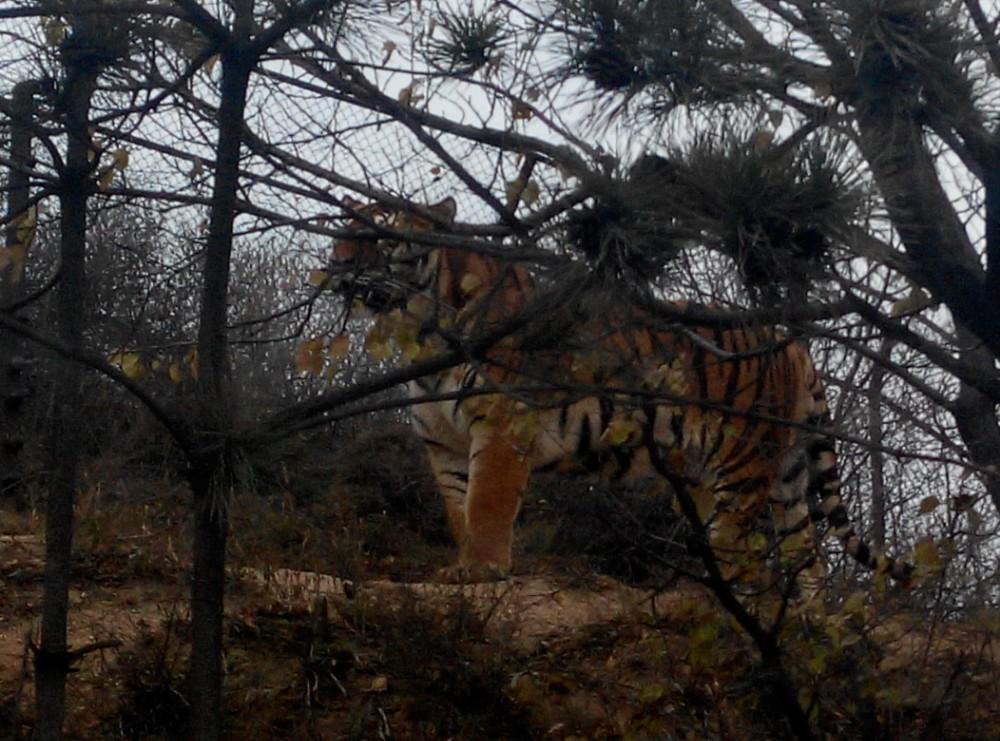 北京第一天——八达岭野生动物园之行