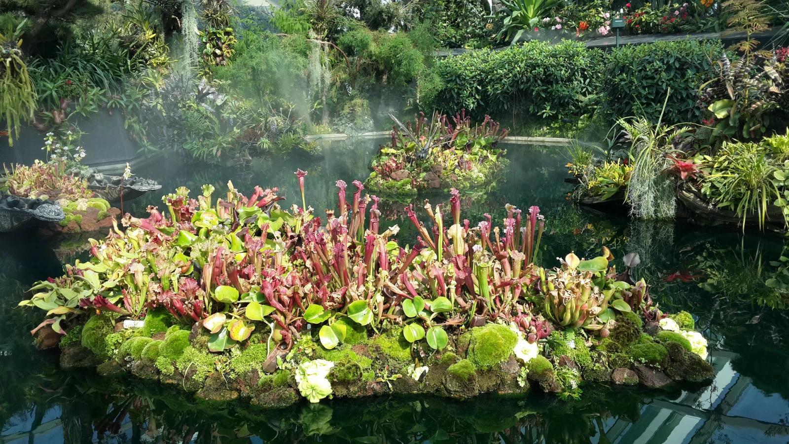 在发展经济盛行的今天,小小的新加坡奢侈地用一大片地建了园子,培育来自世界各大洲的奇花异草。小到多肉,大到擎天大树,都有自己一席之地,让我惊叹之余忽然有些感动。特别是花穹,美得让人目不暇接。除了花穹和云雾林需要门票,其余均为免费。南花园的空中通道还与金沙相通。