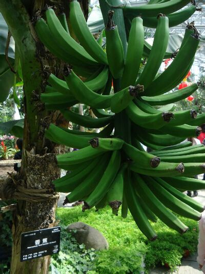 【携程攻略】上海上海植物园适合家庭亲子旅游吗