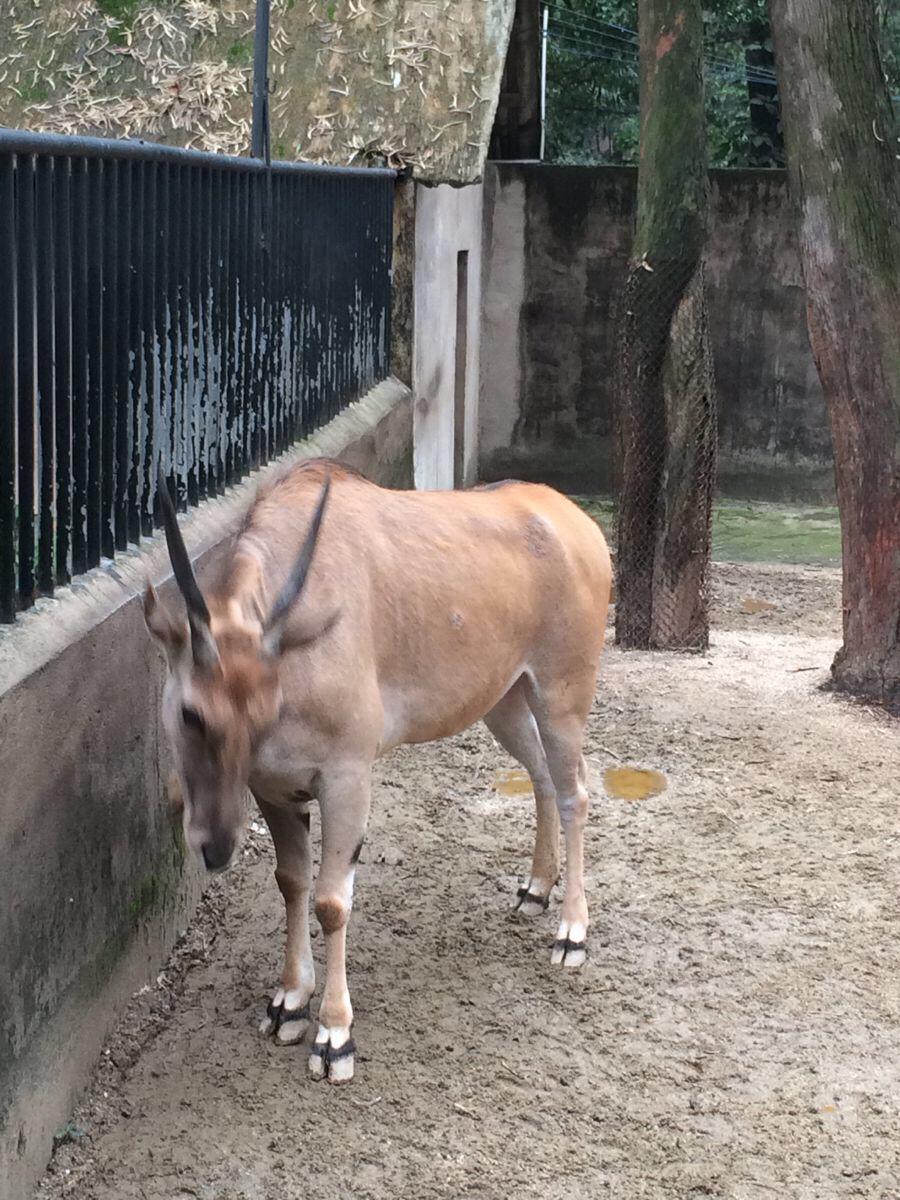 广州动物园里的春意