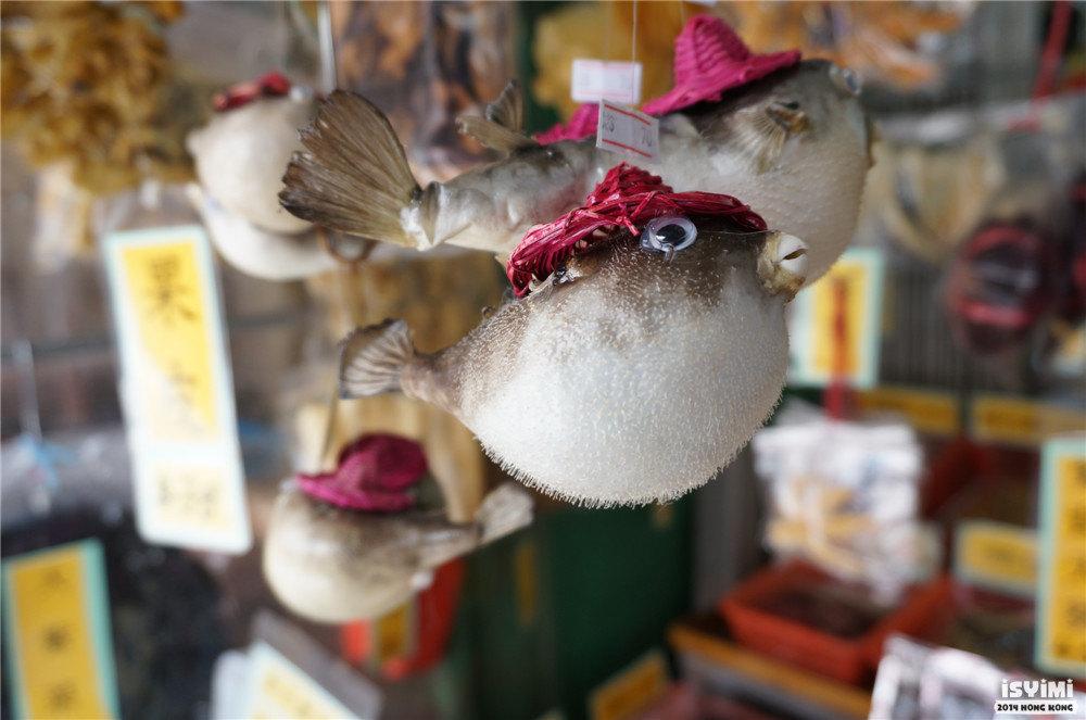 好可爱的鸡泡鱼,这边叫河豚.