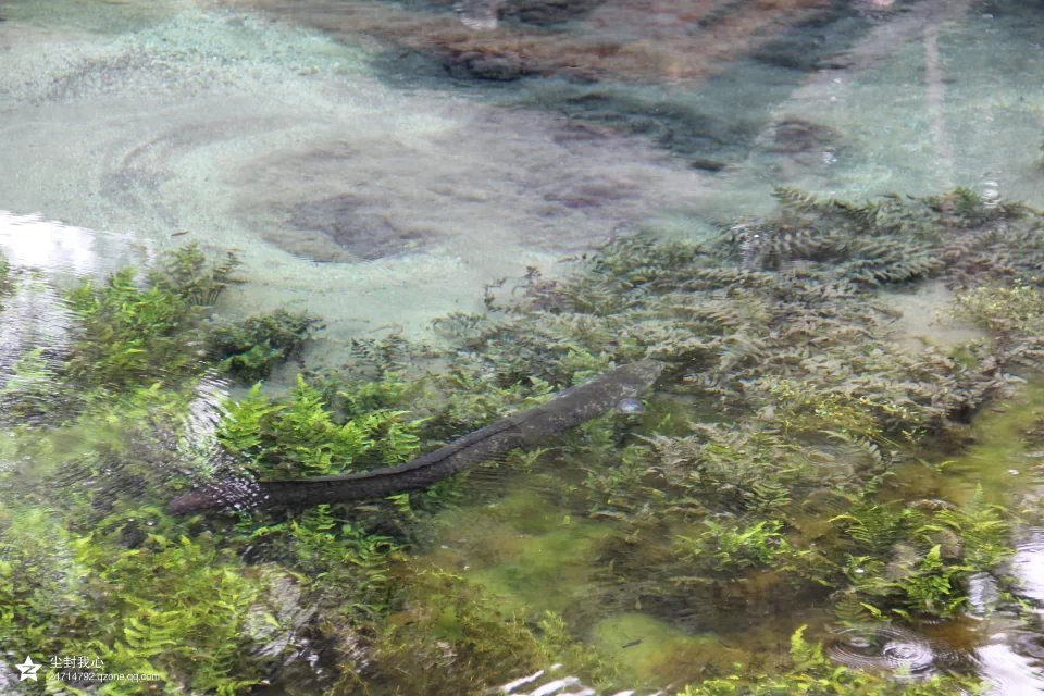 巴厘岛圣泉寺的鱼