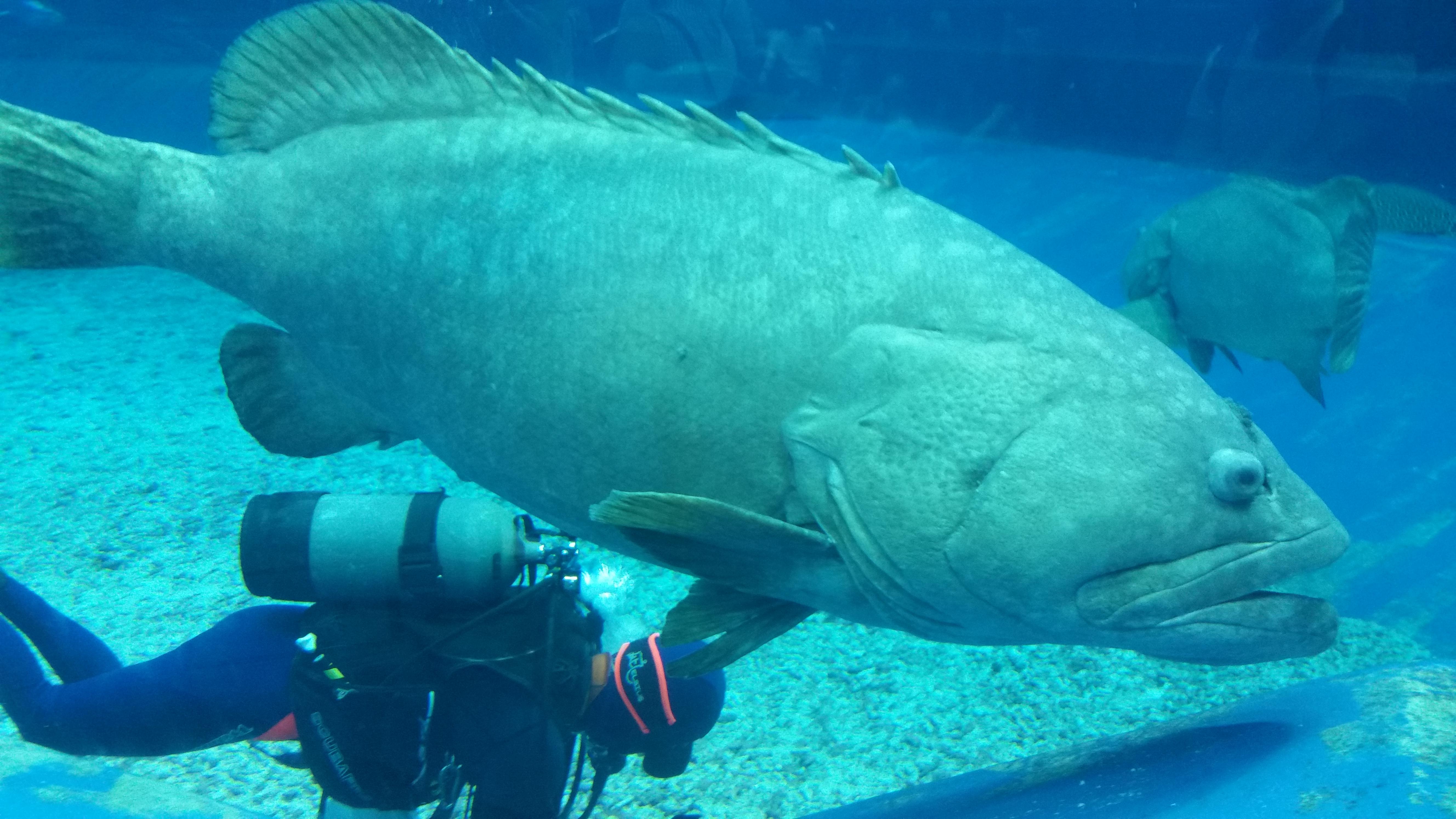 壁纸 动物 海底 海底世界 海洋馆 水族馆 鱼 鱼类 5312_2988