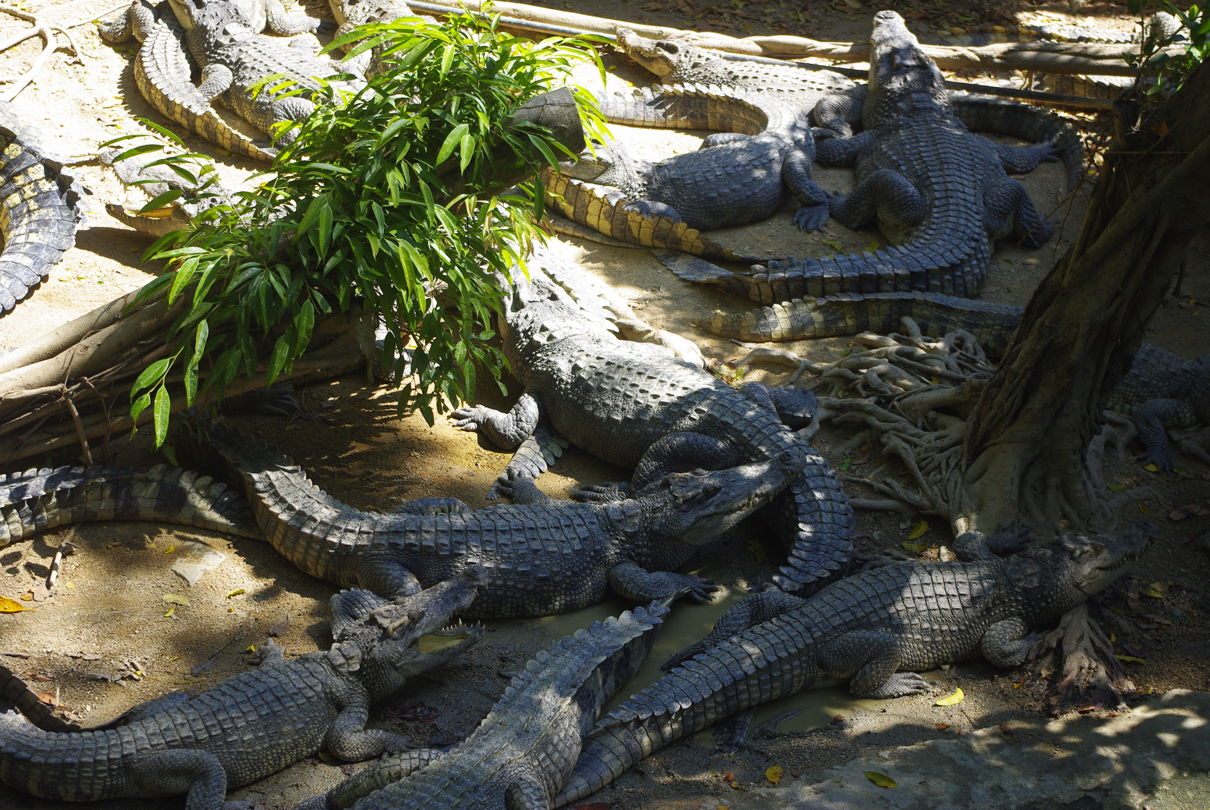 曼谷龙虎园,曼谷芭堤雅龙虎园,泰国龙虎园_点力图库