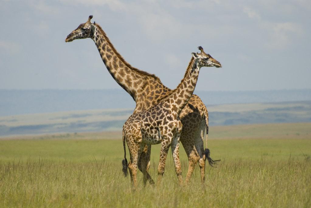关键我们的导游对野生动物及其了解