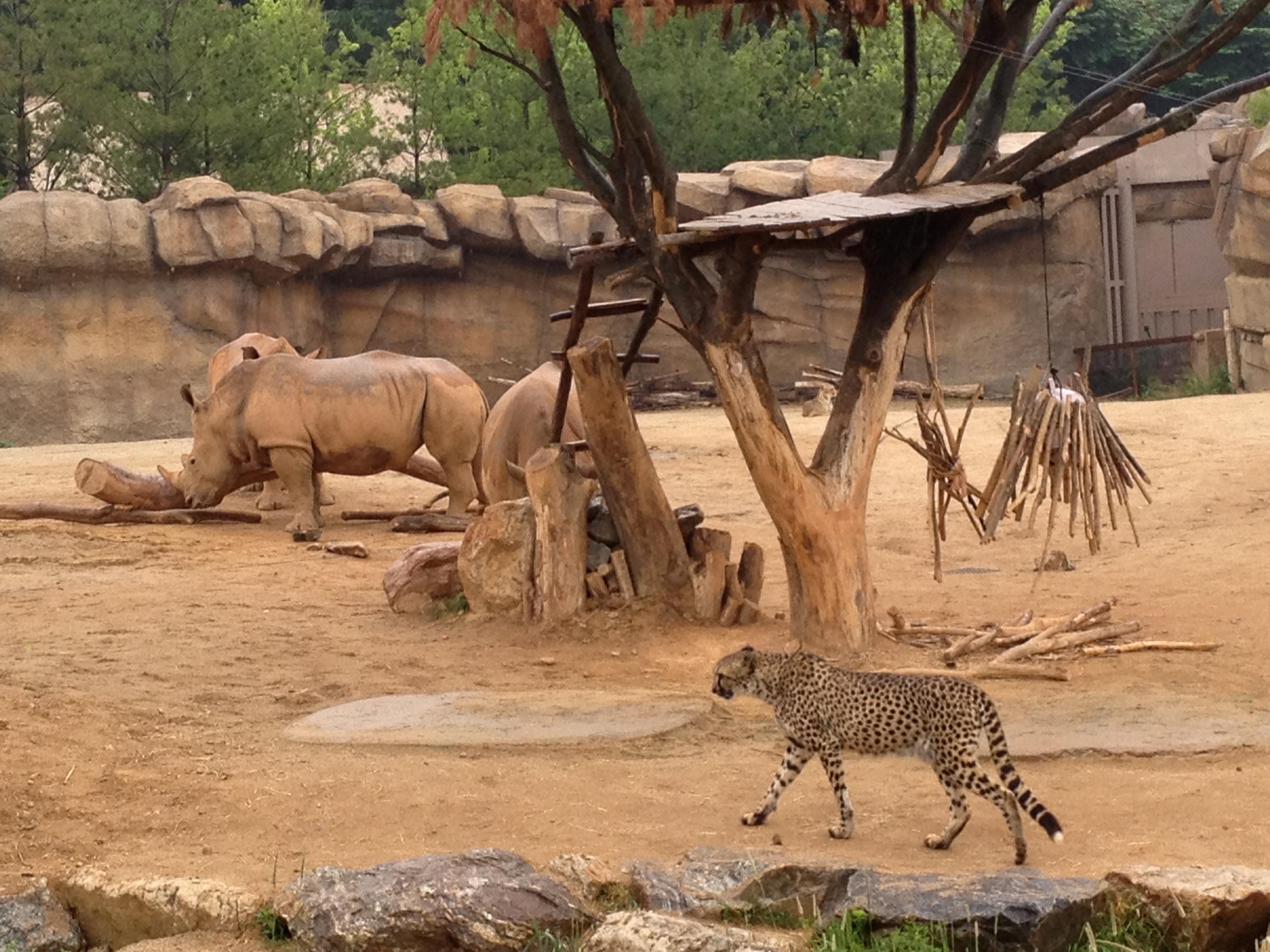 爱宝乐园 我们的行程从动物园