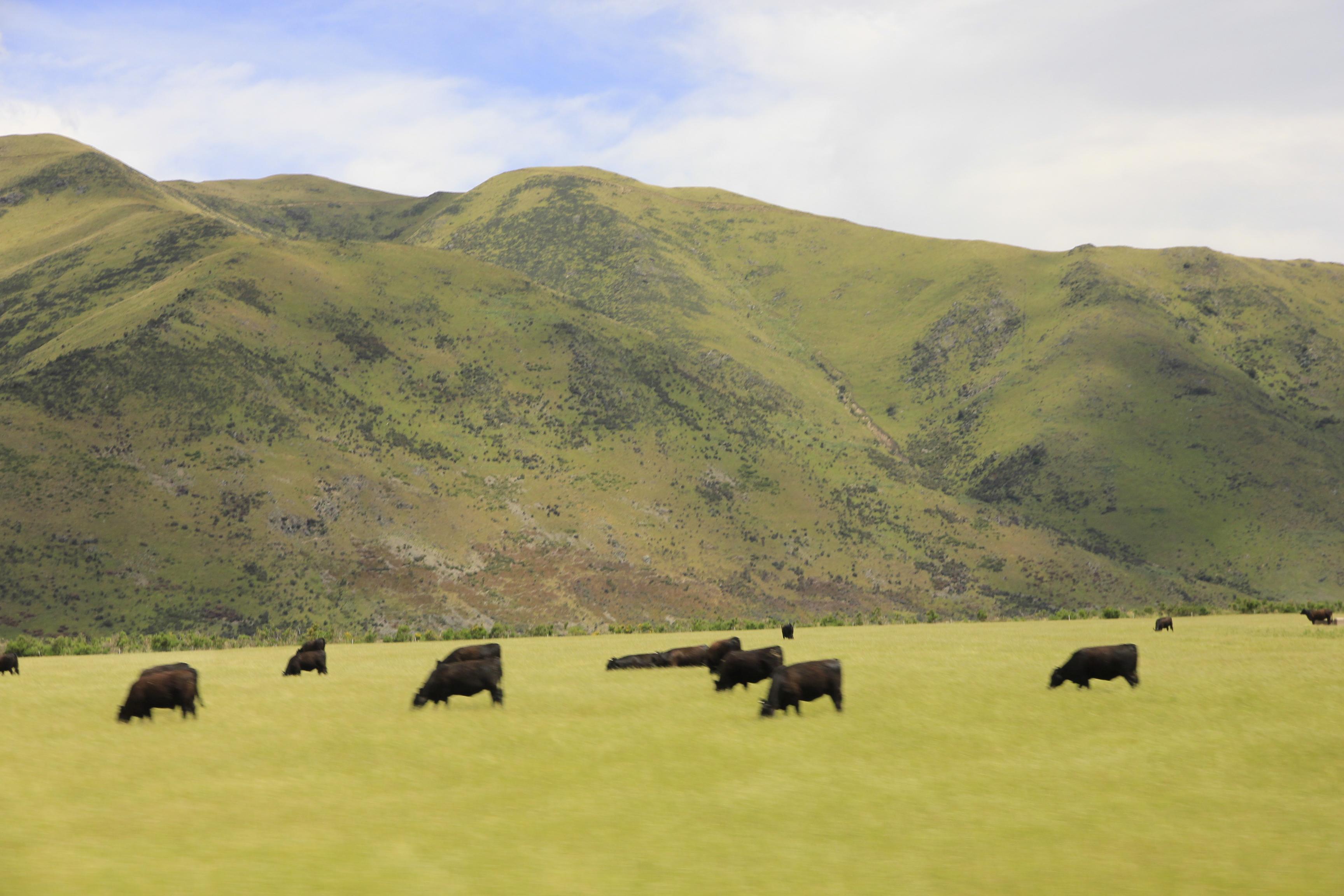 岛主的新西兰南岛之旅