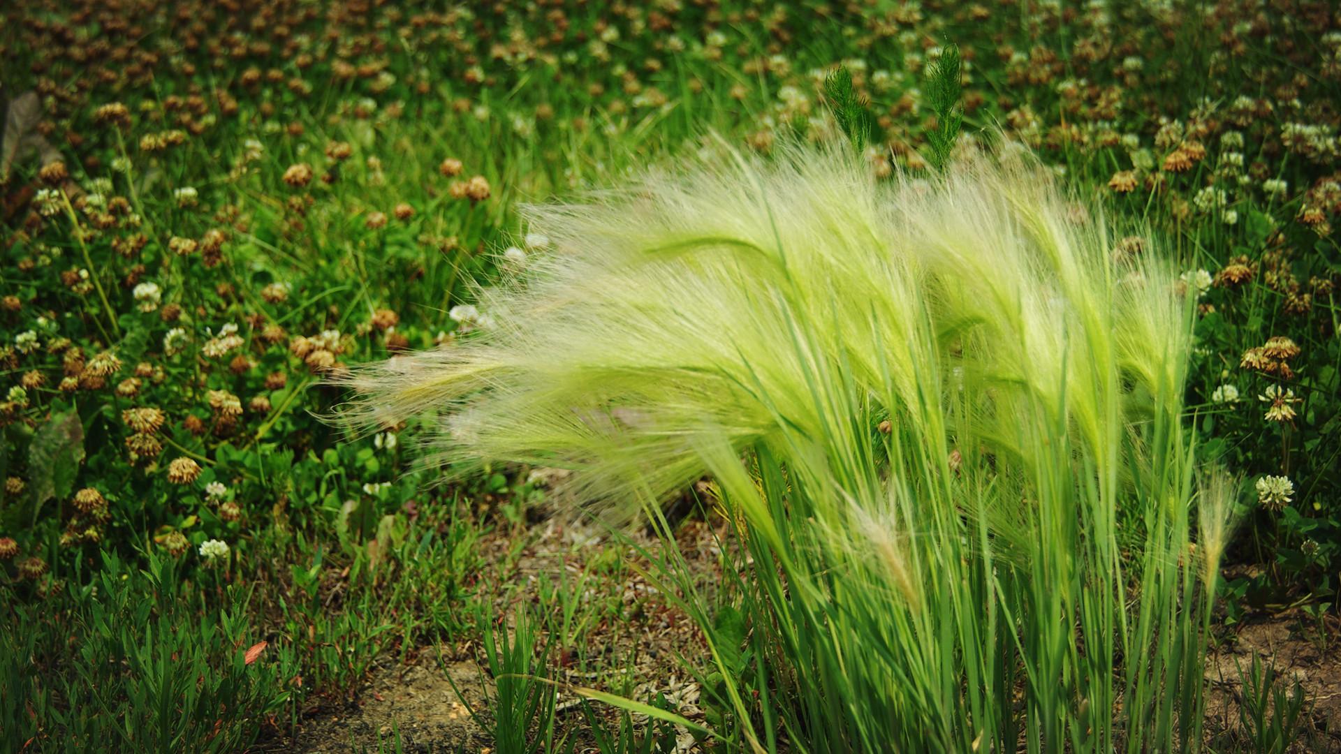 草�9�a���_壁纸 草 绿色 植物 桌面 1920_1080