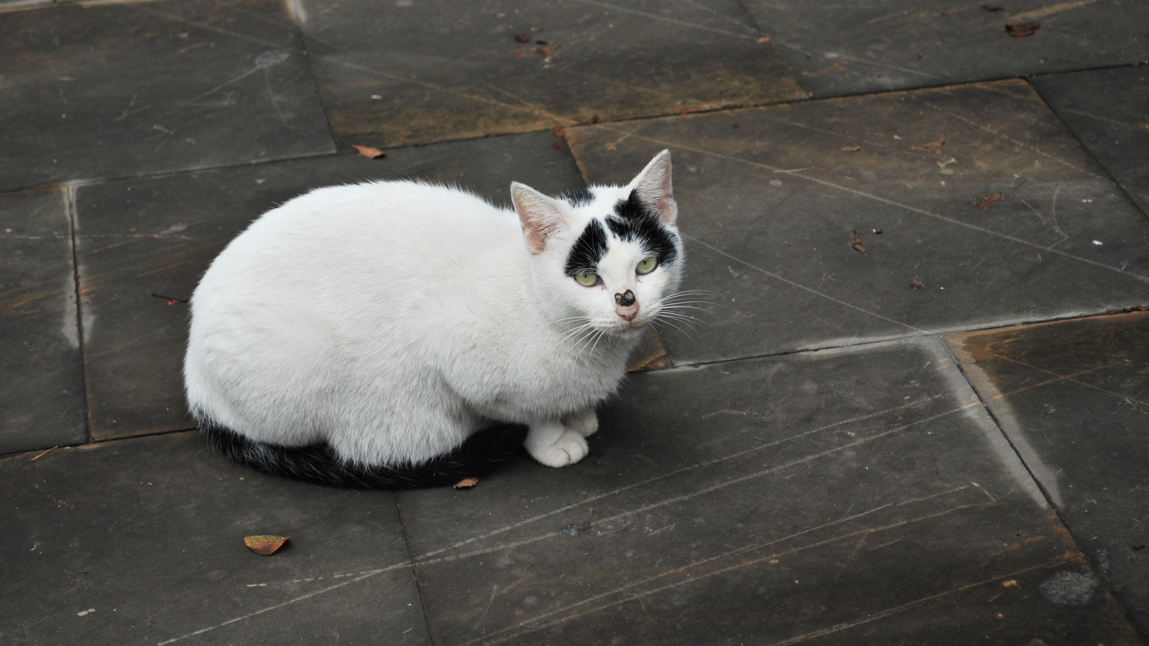壁纸 动物 猫 猫咪 兔子 小猫 桌面 3872_2178