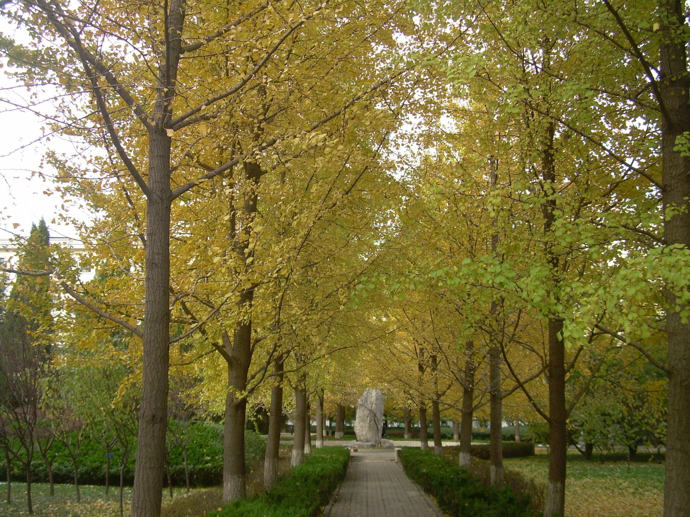 林��i����9�b9i#�f�:#m_小区的银杏林