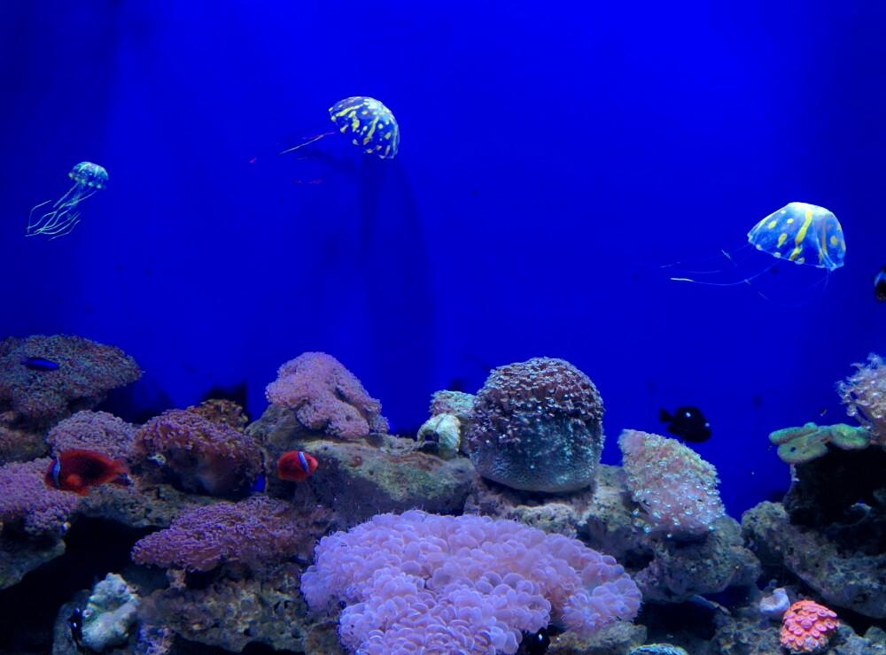 青岛海底世界, 青岛青岛海底世界 攻略/地址/图片/门票 297x220-青岛