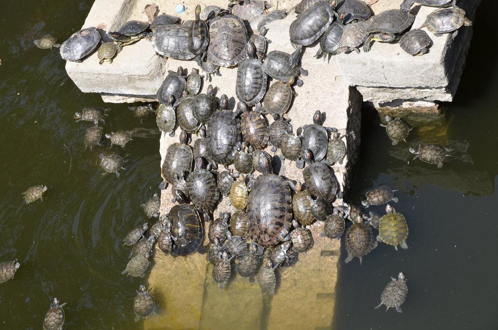 2011福建行(四,南山广化寺--湄洲岛妈祖庙) - 莆田